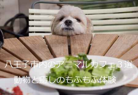 動物カフェ