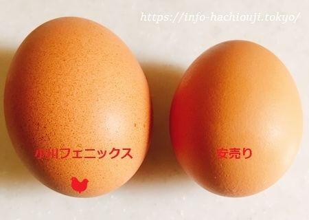 小川フェニックス鳳凰卵山吹 比較 食べ比べ (1)