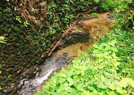 高尾山 琵琶滝周辺の川