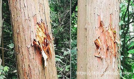 高尾山 野生動物 木