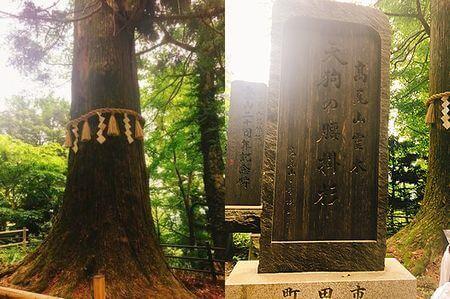 高尾山 天狗の腰掛杉