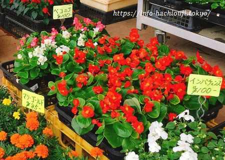 道の駅 八王子 滝山(東京) 花・植物